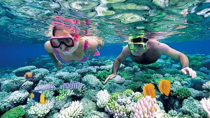 Đừng quên trải nghiệm lặn ngắm san hô khi đến Bãi biển Vàn Chảy nhé